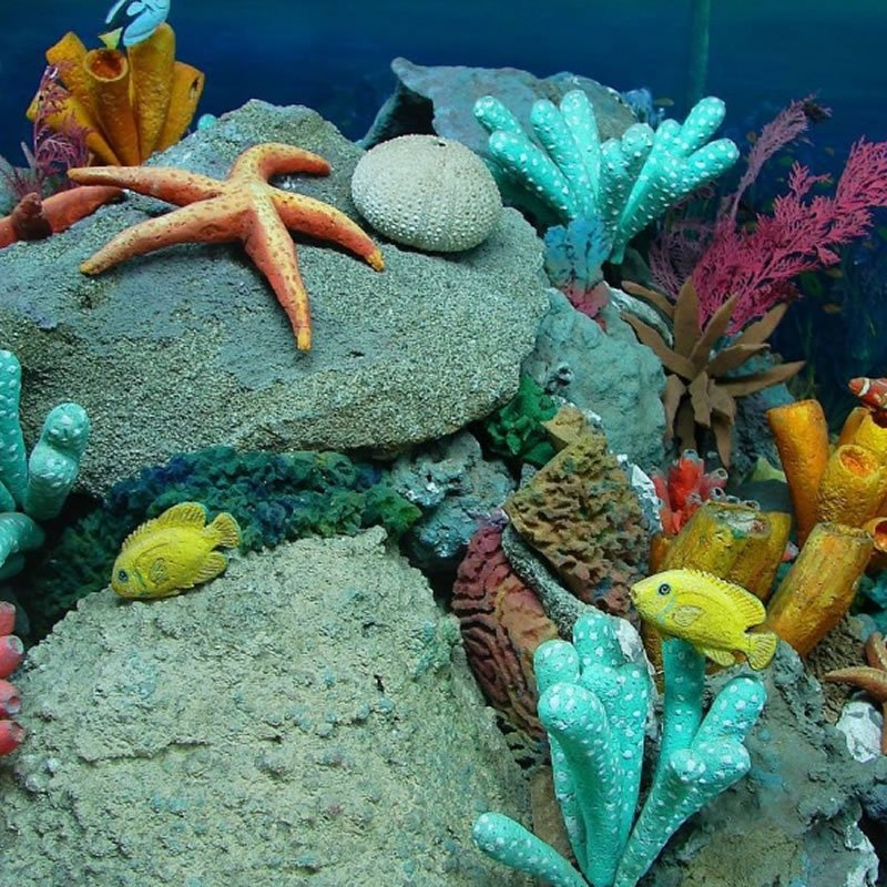 Sea Life Hotel Nember Jesolo